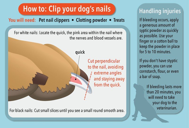 trimming your dogs nails