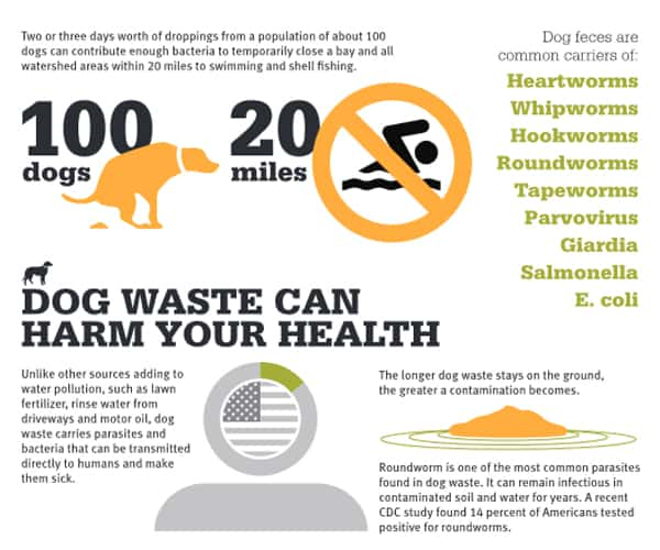clean up your dogs poop
